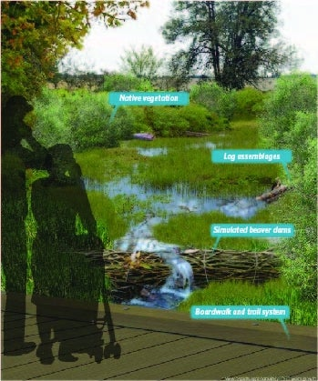Bethany Creek Vegetation Growth | Benefits of Innovative Stormwater Approach Can Include Lower Costs, Less Effort