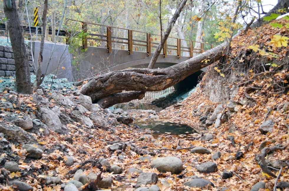 Quiota Creek Fish Passage Enhancement