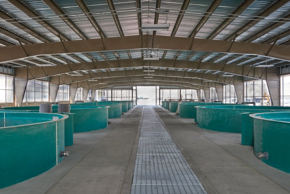 Wells Hatchery Modernization