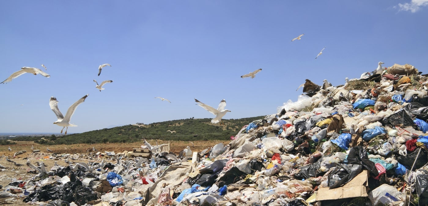 birds flying over landfill trash site
