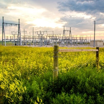 Substation with field of yellow flowers in foreground