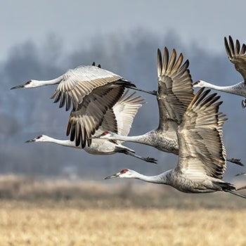 Sandhills Take Flight | Cottonwood Ranch Broad-Scale Recharge